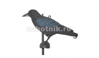 Ворона чёрная
