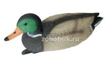 Чучело BIRDLAND кряквы-селезня 7416