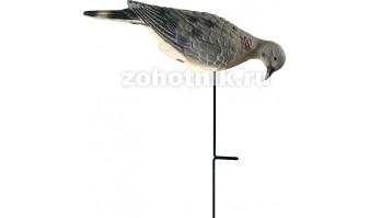 Чучело кормящегося голубя